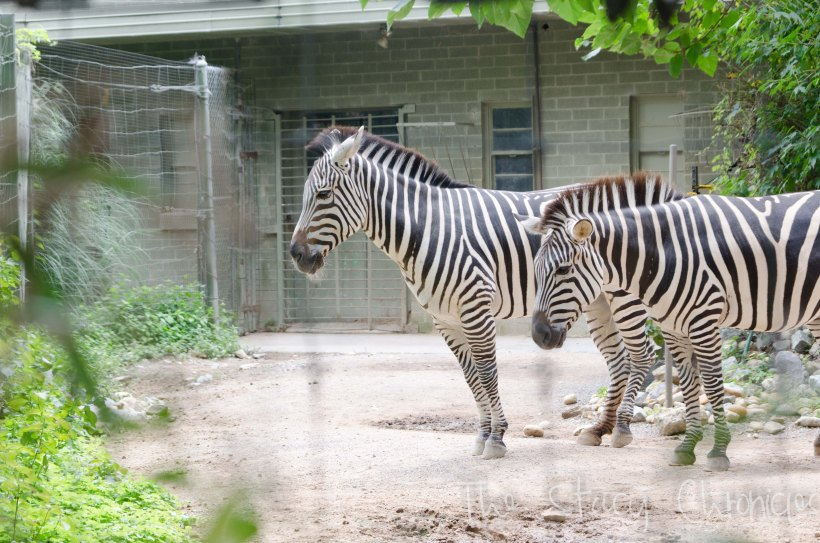 Day at the Zoo 086