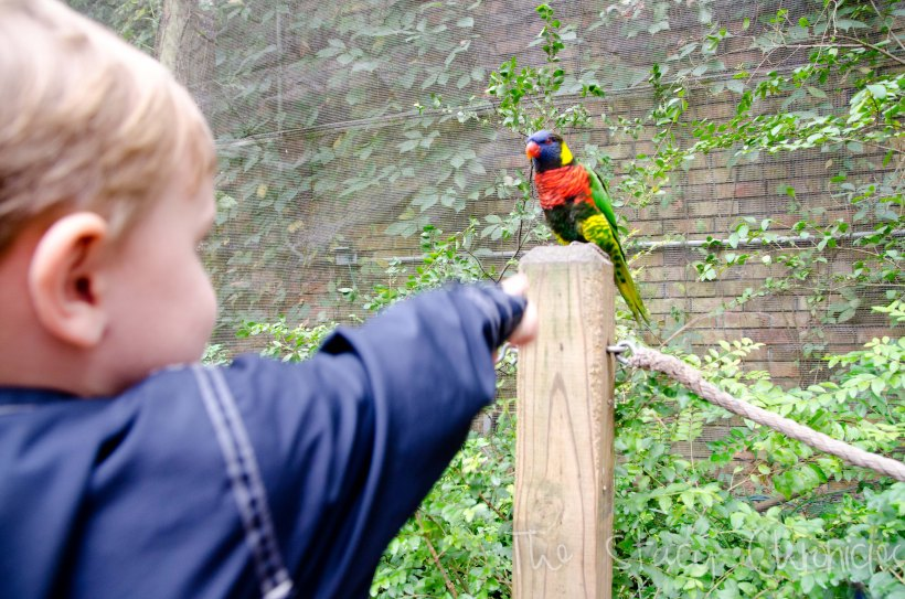 Day at the Zoo 186